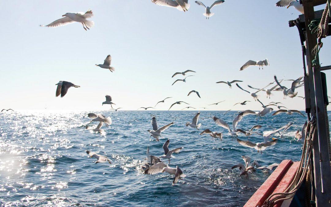 El GALP Mar de l'Ebre estrena web